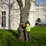 Arbtech arboriculturist doing a a Tree Survey