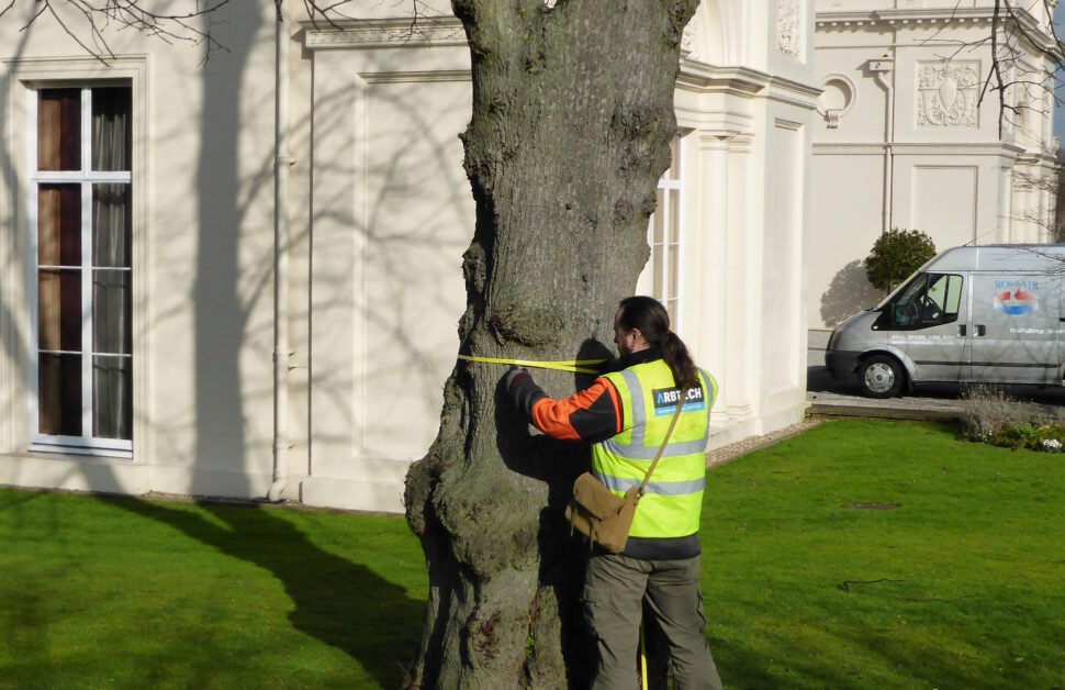 A Mortgage Tree Survey in London