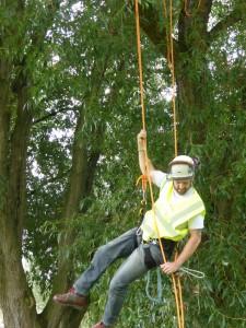 Tree surveys by Arbtech