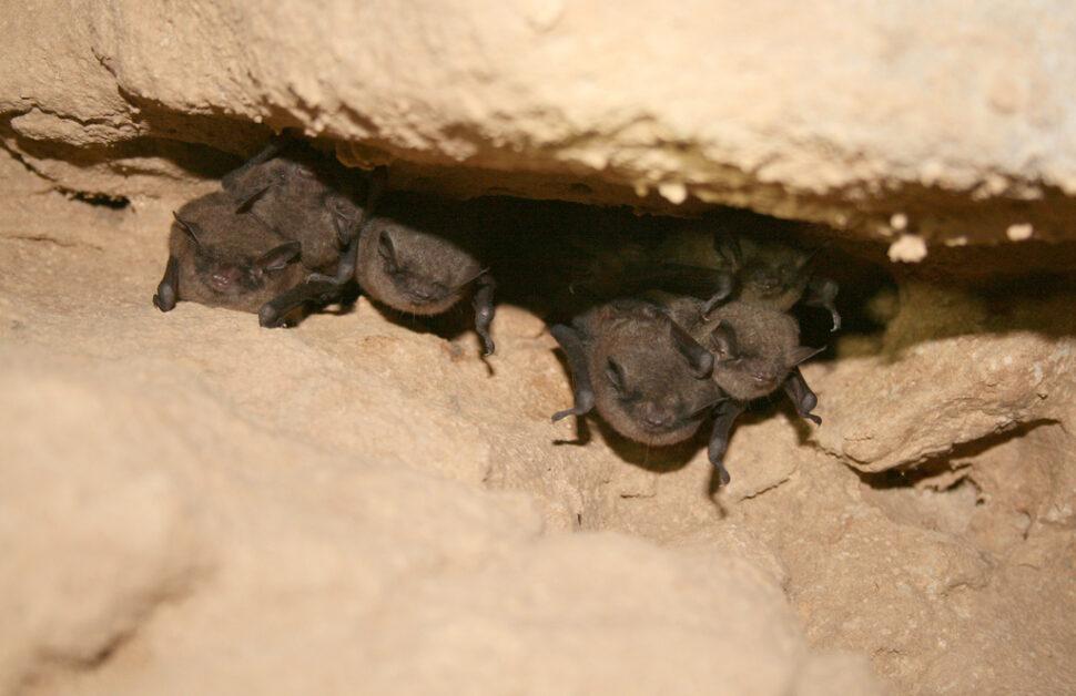 Do I need a bat survey?