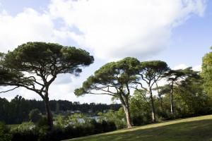 BS5837 tree survey, Tree constraints plan