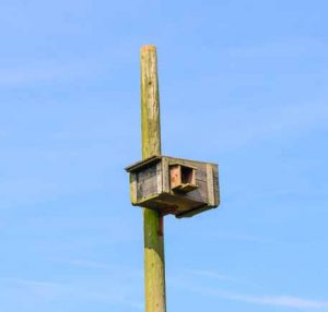 A barn owl nesting box