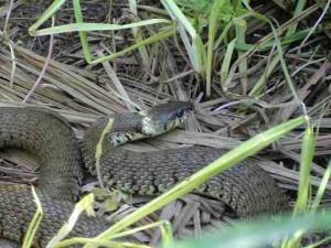 Arbtech Reptile Survey