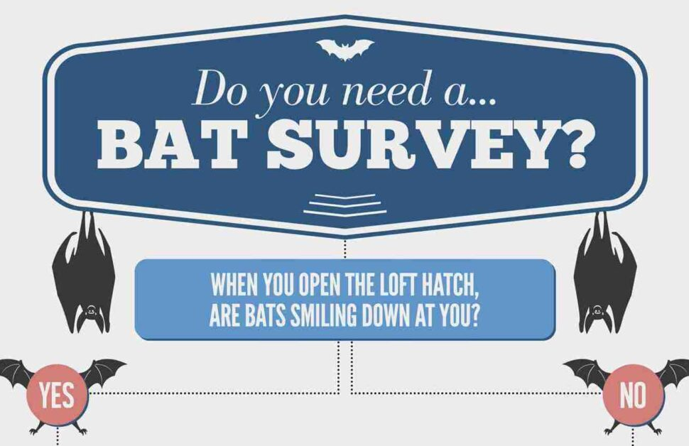 Picture for bat survey page