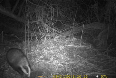 Badger Survey Infra Red Camera