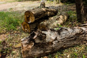 Dead wood piles like this can host many types of smaller wildlife.