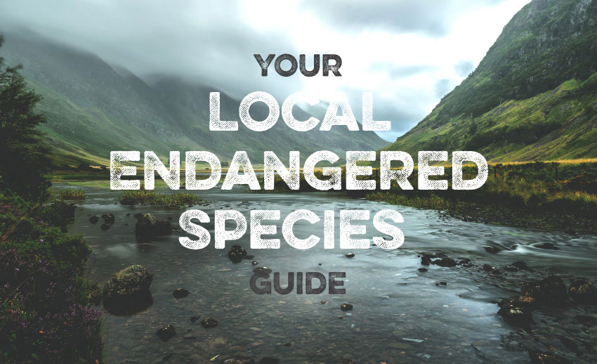 A local guide to endangered species in the UK feature image