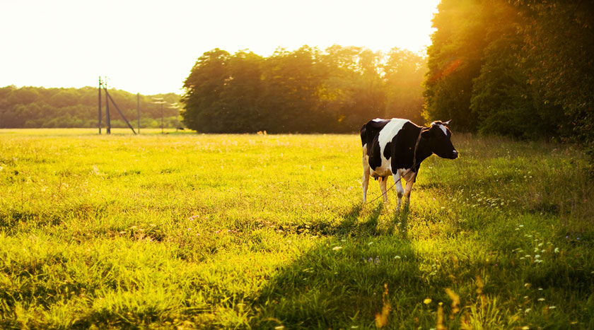 Is there such thing as an ethical carnivore? Read Louise B Gray's full post on Arbtech.co.uk