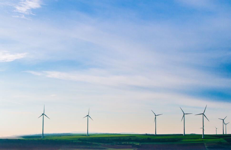 Bat Survey Wind Farm