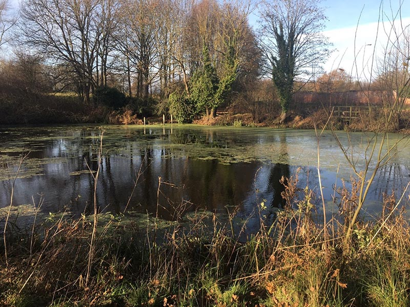 Figure 2: A GCN pond at Preston Montford.