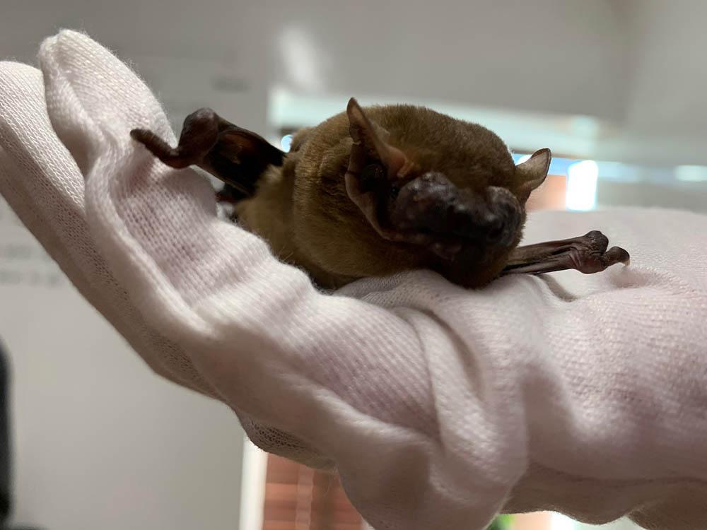 Bat Surveyors