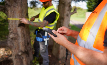 tree surveyors in Leeds